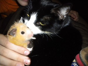 Hammy & Princess